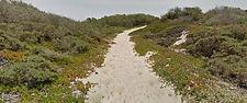 Oceano Dunes Preserve Trail, Oceano