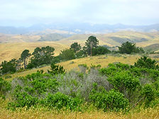Washburn Campground, San Simeon