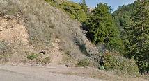 Mill Creek Trail, Big Sur