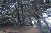 Ragged Point Inn Trail, Big Sur