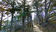 Cypress Grove Trail, Big Sur