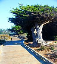 Moonstone Beach Boardwalk, Cambria hiking trails