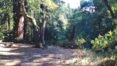 Ventana Campground, Big Sur
