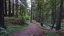 Hare Creek Trail, Big Sur