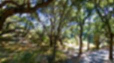 San Luis Obispo County Campgrounds