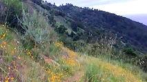 North Coast Ridge Trail, Big Sur