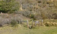 Vicente Flat Trail, Big Sur