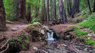Big Sur Hiking Trails