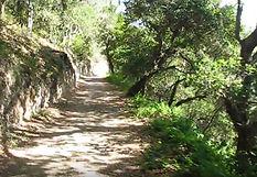 Sycamore Crest Trail, Avila Beach