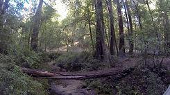 Buzzard's Roost Trail, Big Sur