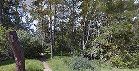 Ridge Trail South, Cambria hiking trails