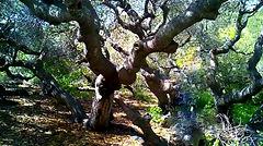 Los Osos Nature Trail