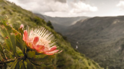 Protea and Pungwe Gorge