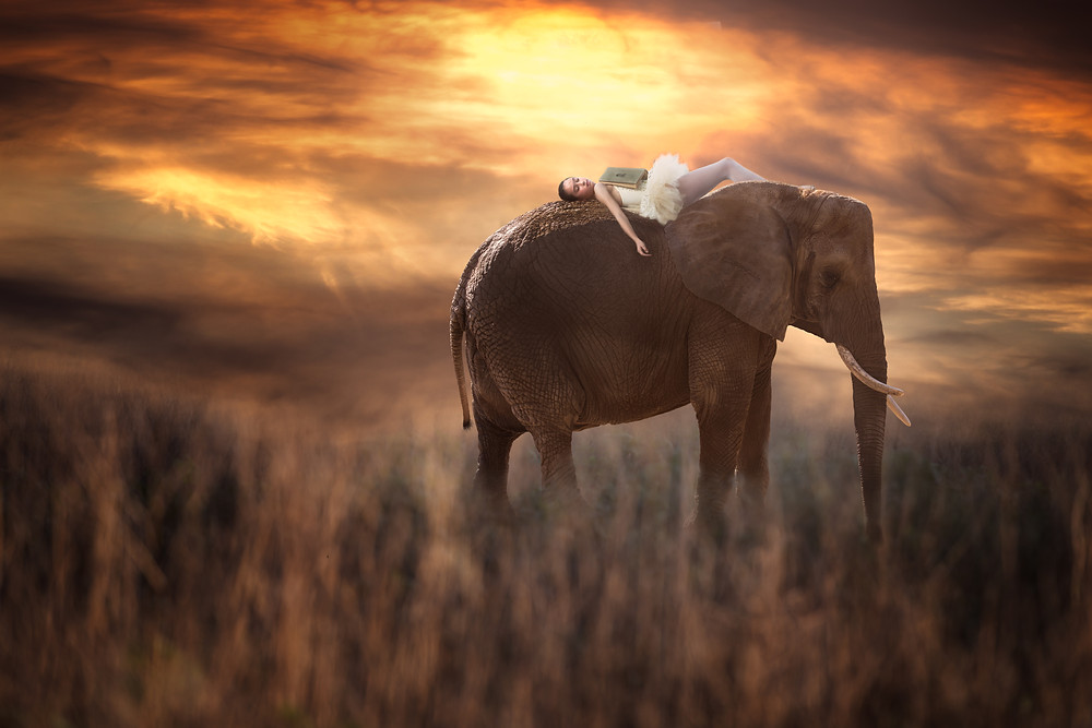 dreaming on an elephant's back!