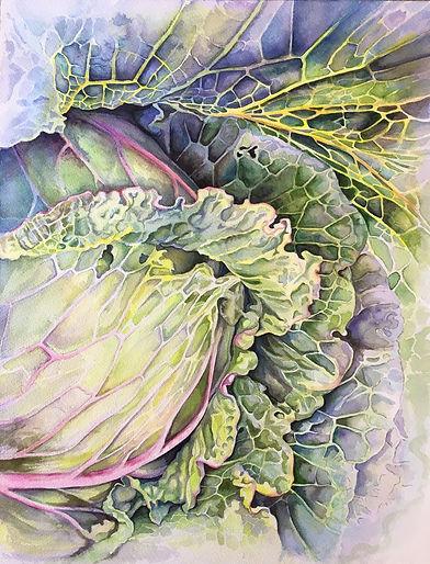 cabbage_unfurled.jpg