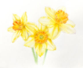 bi_color.jpg