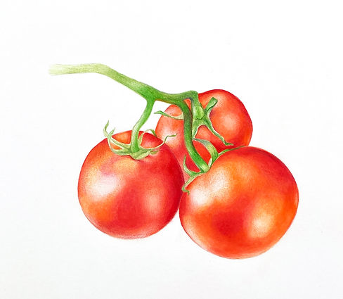 early_girl_tomates.jpg