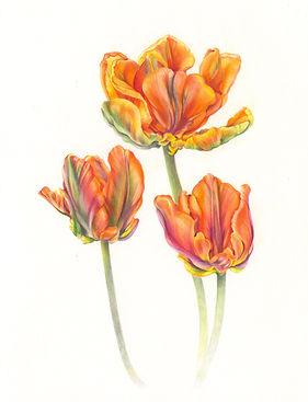 parrot_tulips_irene.jpg