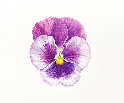 purp_lt_purple.jpg