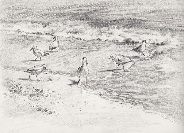 sea_gulls_1.jpeg