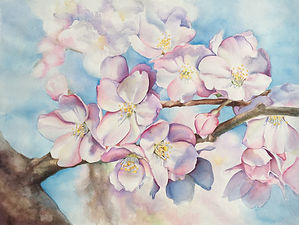 cherry_blossms.jpg