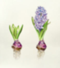 blue_hyacinth.jpg