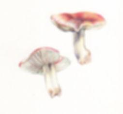 red_mushroom.jpg