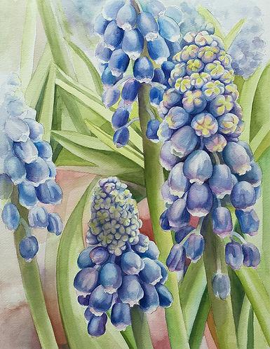grape_hyacinth.jpg