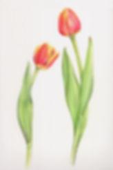 2_tulips.jpg