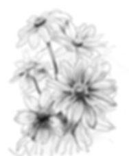 Redbeckia_Study.jpg