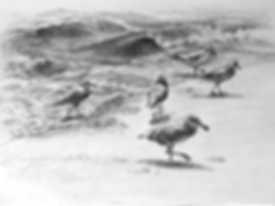 sea_gulls_4.png