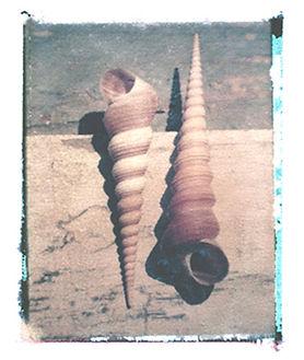 two_shells.jpg