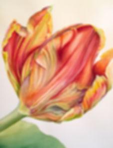 red_yellow_tulip.jpg