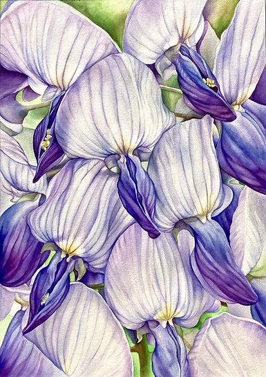 wisteria_1.jpg