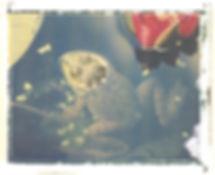 Frelinghuysen_Frog.jpg