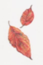 dogwood_leaves_2.jpg
