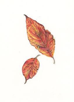 dogwood_leaves_2018.jpg