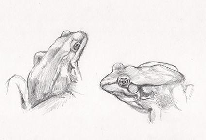 frog_study.jpeg