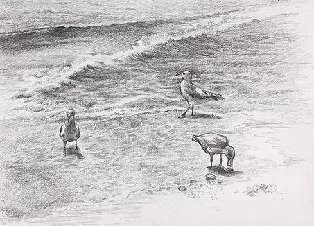 sea_gulls_2.jpeg