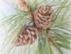 pine_cone_final.jpg