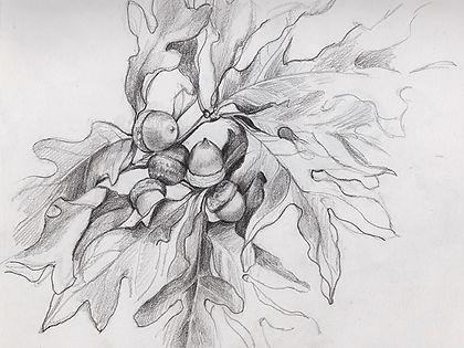 oak_branch.jpeg