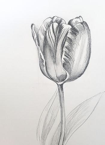 tulip_blossom.JPG