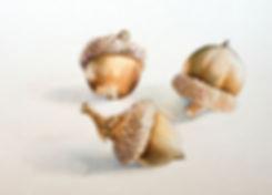 acorn_study_.jpg