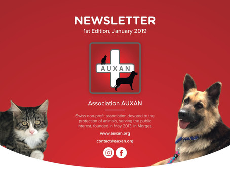 (English) NEWSLETTER AUXAN - Edition 1, Jan 2019