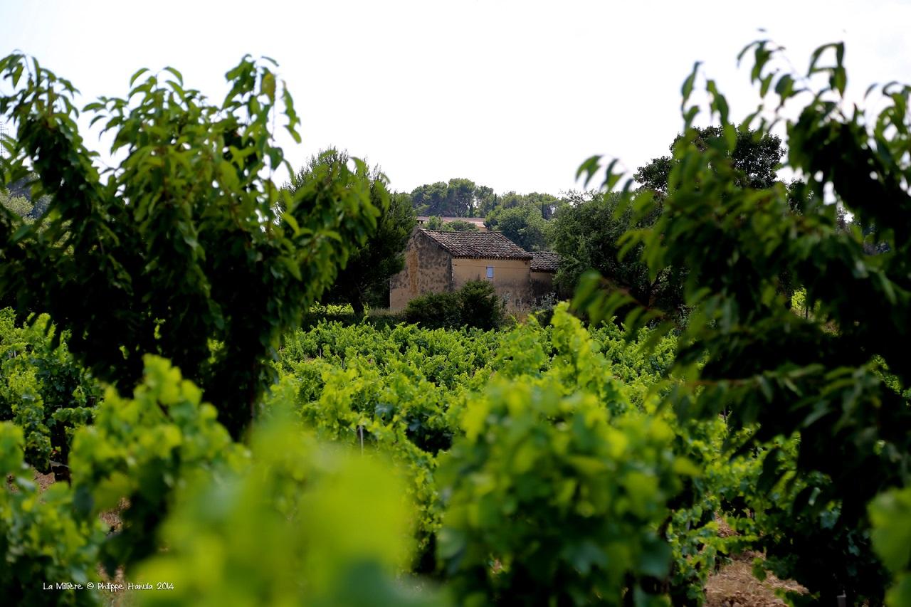 La_Millière_vignes_et_Bessade