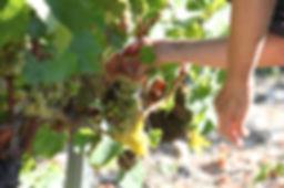 logistique export pour les viticulteurs