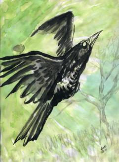 crow green.jpg
