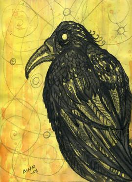 crow8.jpg