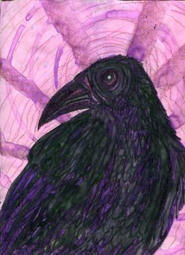 crow violet 2.jpg