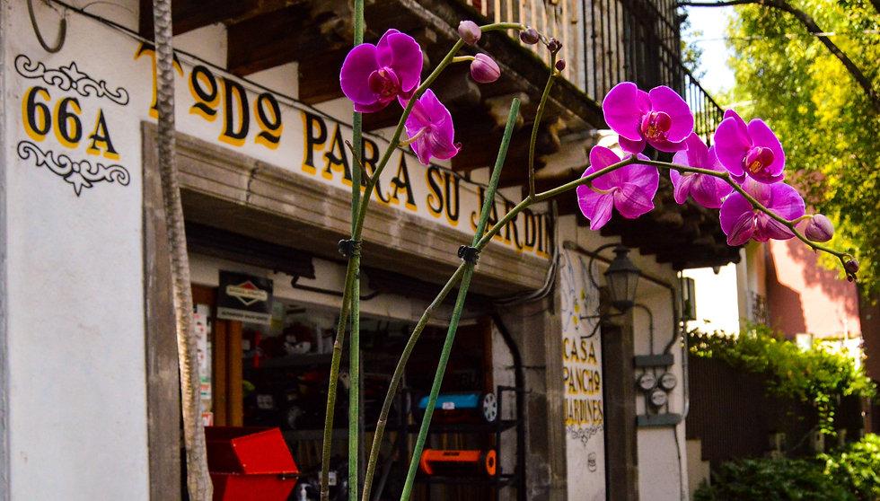Casa Pancho Jardines 6_edited.jpg